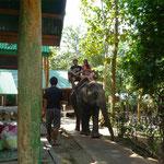 Spaß mit den Elefanten