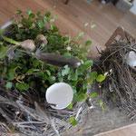 Nest gefüllt
