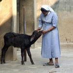 An orphan buffalo