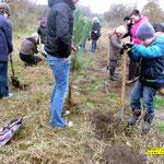 Bäume pflanzen im Kinderwald