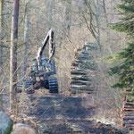 """Bei der Nistkastenreihe im Waldgebiet Großholz wurde im großen Stil Holz """"geerntet""""."""