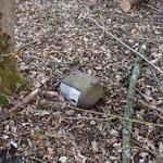 Zwei Nisthilfen sind durch die Waldarbeiten verschwunden. Einer lag auf dem Boden.
