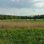 Wiesen südlich von Hohenhaslach 12.05.2006