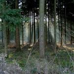 Sonnenstrahlen im Wald Großholz 13.01.2008