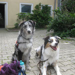 Maya und Mister Diesel