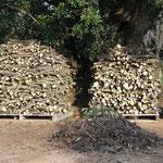 Das geschnittene Holz wird aufgestapelt