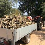 Olivenholz vom schneiden
