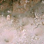 Fangtrichter von Ameisenlöwen