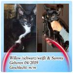 Sammy und Willow