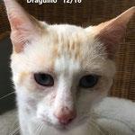 Draguillo