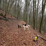 Horch, was kommt vom Walde her - Benkerjoch