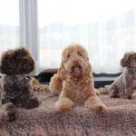 Mylie, Siemi und Sämi