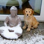 Zen Harry