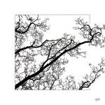 ECHAPPEE - forex - 50x50