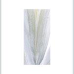 EPINEUSE NACRE (2) - forex encadré - 40x50