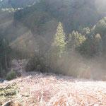 冬のキウイ畑(仕事始め)