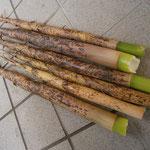 タケノコの終り 真竹