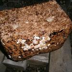 椎茸の菌床栽培セット
