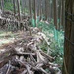 早朝より:鹿よけネット整備とシイタケ採り