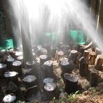 シイタケのホダ場へ散水