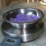Lavendel gerebelt und gewogen