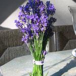 Lavendel gesammelt