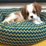 Rodeo Cavalier King Charles