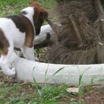 Des chiots dans leur jardin