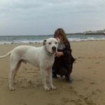 Macrom Dog Argentin