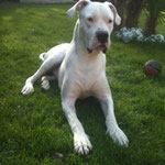 Xito Dog Argentin
