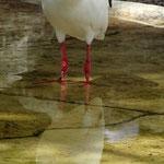 Unknown Bird - Busch Gardens Tampa - Florida by Ralf Mayer