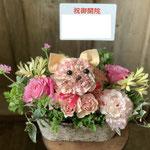 ねこ 5,000円~