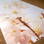 飲食店の空間を演出する花の写真をプリントした大判和紙