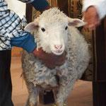 Auftritt des 'Guten Schafes' ........