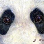 Animal eyes 5