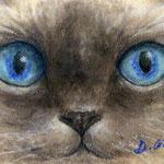 Animal eyes 1