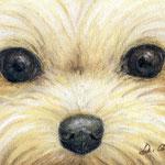 Animal eyes 6