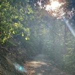 Mystische Morgenstrahlen gemixt mit kühler Waldluft. Was will ich mehr?