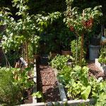 Gemüse und Obst-Garten