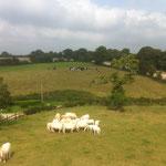 Convivialité avec les 2 troupeaux de la ferme