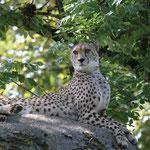 Gepard 20.05.12