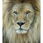 2010 - Le roi Lion