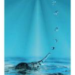 """2016 - L'éléphant""""eau"""""""