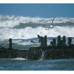 2007 - Ambiance marine - Ile d'Oléron
