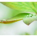 2016 - Perle de pluie