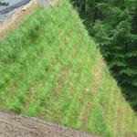 KBE Grün 45: A45 bei Hagen, Kranstellflächen W3, kurz nach Fertigstellung 08/2017 - das Gras wächst...