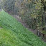 KBE Grün 45: satter Bewuchs durch die Saatgutmatte im Oktober 2017