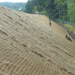 KBE Grün 45: fertige Steilböschung: Begrünungsmatte aus Kokos mit Saatgut - Juli 2017