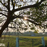 Surya Pongal, blessed with mild sun rays