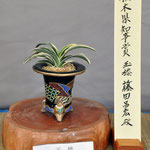 Tochigi prefecture governor Award (栃木県知事賞)    Variety:Gyokuro    Winner:Masahiro Fujita